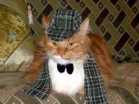 Усатые сотрудники</p> <p>В разгар рабочего дня, среди суеты и в условиях аврала иногда так хочется обнять или хотя бы погладить что-то теплое, мягкое и пушистое. Например, кота. Впрочем, подошел бы даже хомяк, однако руководство не всегда разрешает сотрудникам заводить живность на рабочем месте. Портал Rabota.ru поинтересовался, какие животные обитают в российских офисах и какую роль они играют в жизни работников. Котаны, котики и котейки Очевидно, что самыми популярными домашними любимцами, конечно же, являются кошки. Правда, это не удивительно: пушистые, игривые и в меру прожорливые — как их не любить? Но если дома кот символизирует уют, то на работе он иногда становится проблемой для своих хозяев. Ведь нужно как-то организовать животному туалет, следить за тем, чтобы он не убежал, а также многое другое. Пользователь сайта Rabota.ru Все таджики, кроме я: «У нас в офисе жил кот, который буквально свалился к нам в окно (низкий первый этаж) маленьким котенком с покалеченными лапками. Мы его вылечили, выходили и оставили офисным питомцем, назвали по имени компании, уменьшительно только. Когда он достиг определенного возраста, руководство поставило вопрос о кошачьей кастрации. Я позвонила в ветклинику и узнала весь порядок процедур, а кот в это время бродил рядом и слушал. Вопрос об операции уже был окончательно решен, но через пару дней наш любимец убежал из офиса и остался жить на улице. Видимо, он очень не хотел идти на операцию». И все же кот в офисе приносит больше удовольствия, чем проблем. А иногда еще и помогает коллективу рекламировать себя на рынке и развивать свой бизнес. Так, например, недавно известный новостной сайт Lenta.ru разместил баннер с объявлением: «У нас уже есть кот, теперь нам нужен ведущий менеджер по продажам». К тексту прилагалась фотография вальяжно сидящего и весьма откормленного кота-британца. Игорь Белкин, продюсер новых медиа Lenta.ru: «Это 7 килограмм отборного кота! Его зовут Моня, и он никогда не жил в редакции, только у меня дома. О