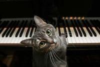 ноты для фортепиано максим знаешь ли ты