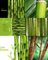 Клипарт бамбук. Изображения камбука.